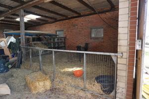 Landwirtschaft wird auf dem Hof der Familie Scheer in Halle (Westfalen) schon lange nicht mehr im großen Stil betrieben. Zwei Schafe stehen noch in einer Scheune