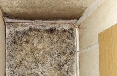 Schimmelbefall auf asbesthaltigem Wandputz