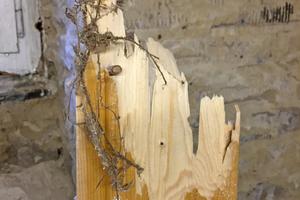 Rechts: Das vom Echten Hausschwamm befallene Holz