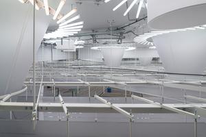 Montage der Lichtdecke durch die Mitarbeiter der Firma Ullrich & Schön Fotos: Michael Tümmers