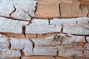 Echter Hausschwamm: Quer zur Faser verlaufender Würfelbruch infolge Zelluloseabbau