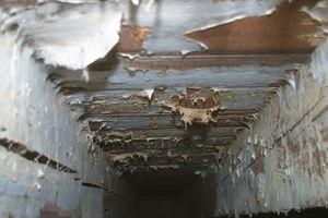 Echter Hausschwamm: Leicht ablösbares Oberflächenmyzel an einer Holzbalkendecke