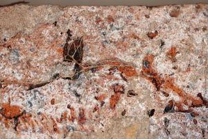 Echter Hausschwamm: Myzelstränge vom Echten Hausschwamm in den Hohlräumen eines Ziegels (Pfeile)