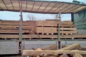 Für die Rekonstruktion der Goldenen Waage in Frankfurt am Main wurde über 300 Jahre altes Eichenholz verwendet