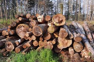Viele Waldbesitzer schlagen wegen niedriger Holzpreise außerdem weniger Holz ein als sonst