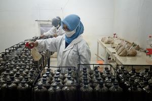 In Singapur und in Bandung in Indonesien wurden die in Flaschen gefüllten und mit Pilzsporen durchsetzten Sägespäne angefeuchtet, um den Pilz anzuzüchten
