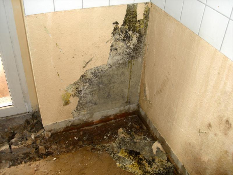 Feuchte Außenwand und Schimmel - Bauhandwerk