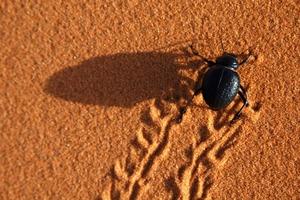 Natur als Vorbild: der Nebeltrinker-Käfer