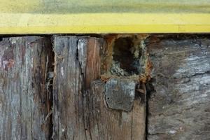 Glücklicherweise wies das Holzfachwerk bis auf kleine Flächen mit Graubefall keine massiven Holzschäden auf