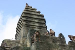 Mittlerweile wird der Tempel von den Affen lebhaft bevölkert<br />