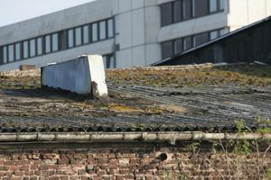 """Sanierungsbedürftiges Wellasbestdach: Die Verwitterung von Zementstein und von Chrysotil-Asbest wird durch Einwirkung von Algen, Flechten und Moosen verstärkt<br /><span class=""""bildnachweis"""">Foto: Hans Jürgen Krolkiewicz</span><br />"""