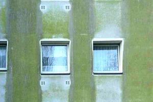 Die Fassade unter die Lupe genommen: In stehender Feuchtigkeit siedeln sich Mikroorganismen an. Das fördert die Ausbreitung von Algen und Pilzen<br />Fotos: Saint-Gobain Weber