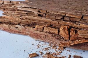 Ein nach erfolgter Altbausanierung verbreiteter Schaden: Dieser einst tragende Holzbalken konnte keine Feuchtigkeit mehr abgeben und wurde durch Würfelbruch zerstört<br />