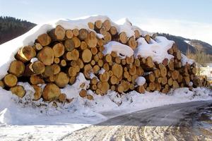 Oben: Die in den Wäldern der Umgebung geschlagenen Weißtannen warten auf den Transport ins Sägewerk. Die schönsten Bretter verwendete die Zimmerei für die äußere Verkleidung