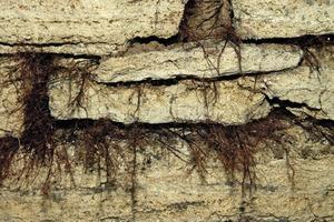 Oben links: Algenwachstum durch Dauerfeuchtigkeit in den stark zerstörten Fugen der Gewölbeinnenseite<br />