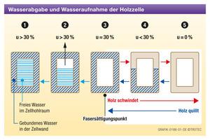 Schematische Darstellung der Wasserabgabe und Wasseraufnahme einer Holzzelle