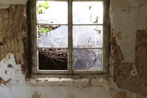 Freigelegtes Fenster mit Blick auf die grün bewachsene Probsteimauer